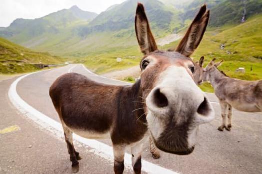 The Donkey Divorce